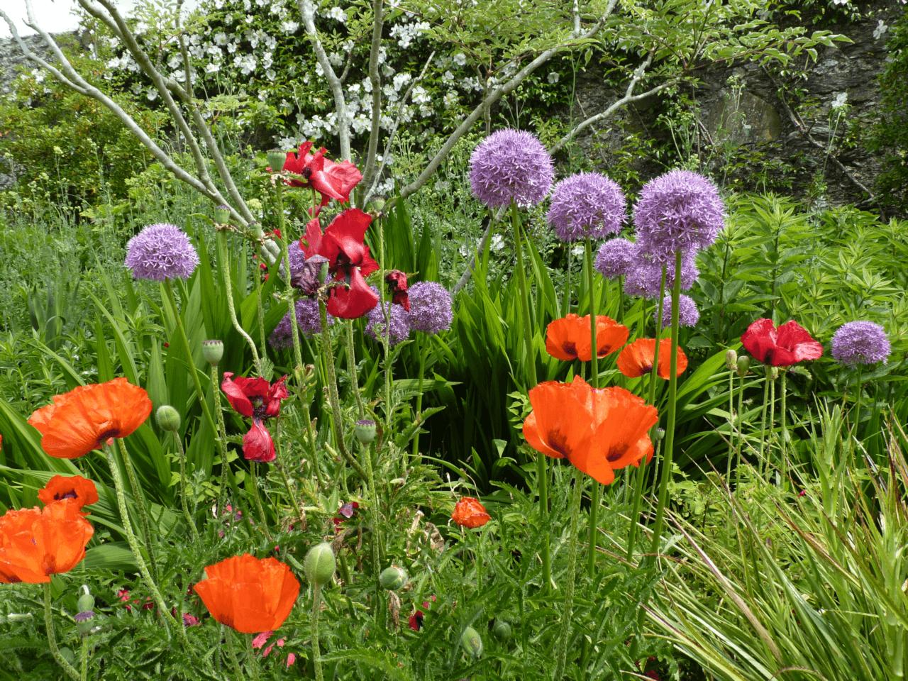 N Wales gardens 1a